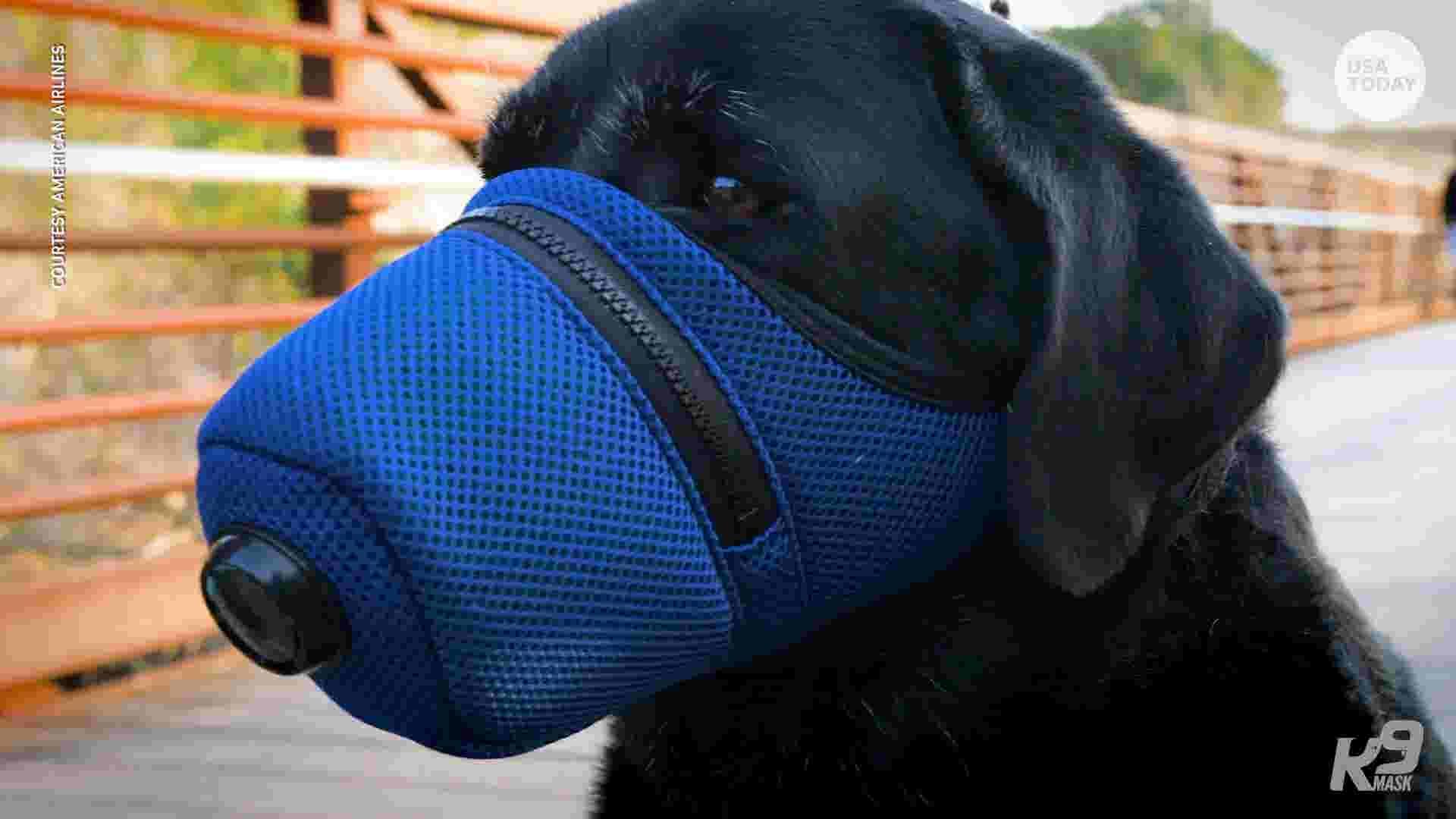 Coronavirus: Dog face masks flying off the shelves in wake of growing outbreak