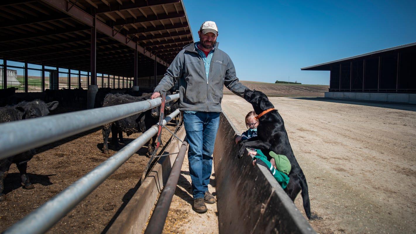 Coronavirus slowdown could force Iowa pork producers to euthanize pigs