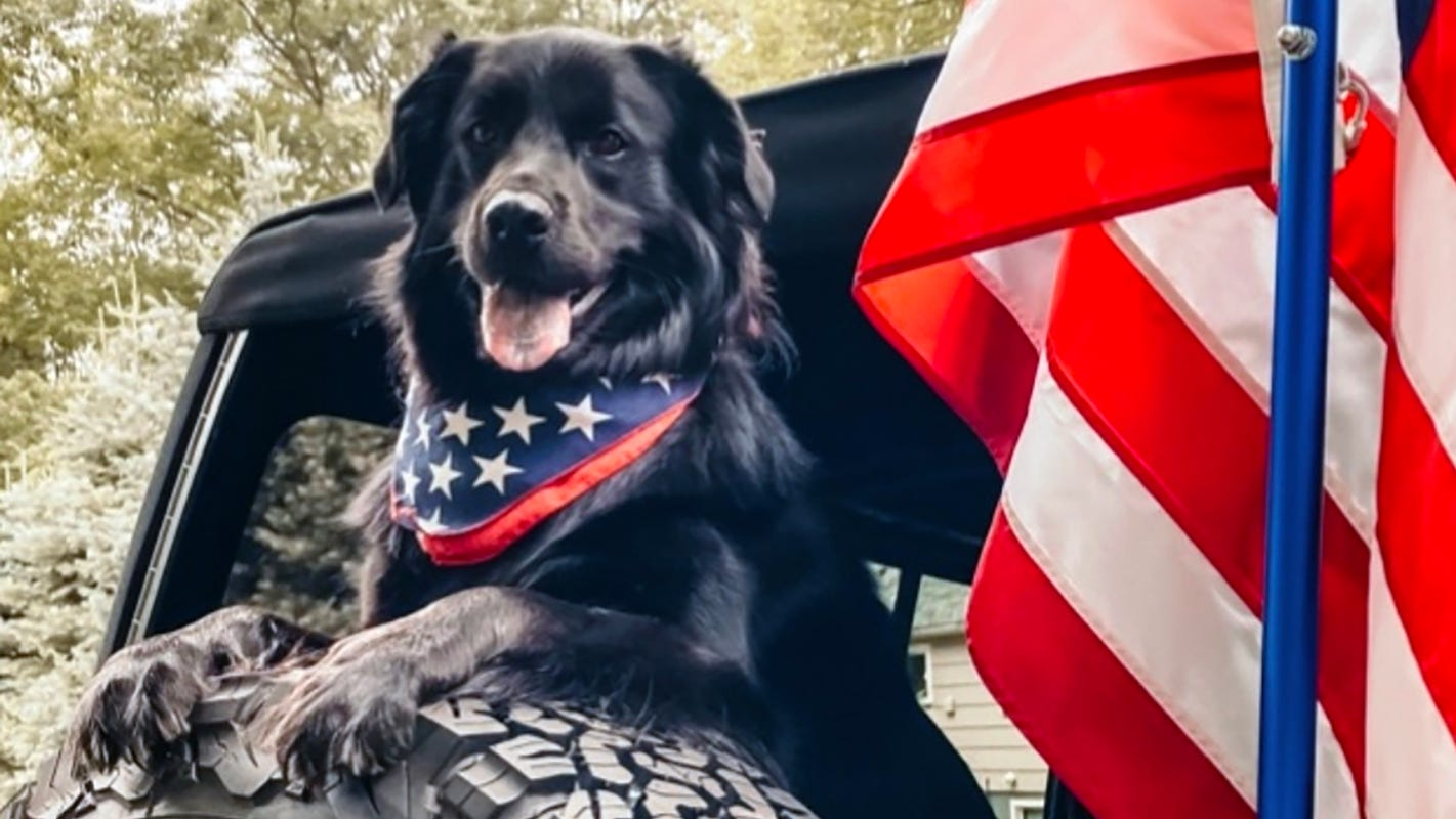 Jeep names winning dog in #JeepTopCanine contest