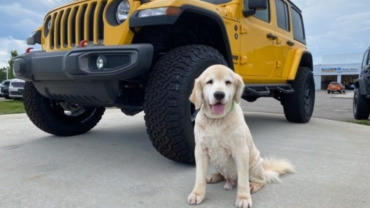 Top 10 cars for dog owners include a few surprises, including Tesla