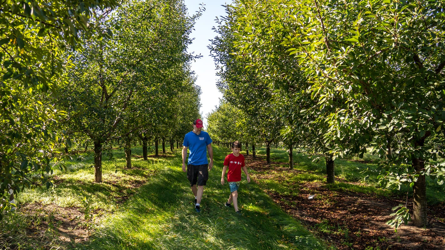 Struggling Michigan cherry farms see new market: voters